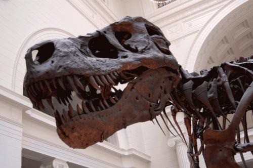 Bertrand Galey et le museum d'histoire naturelle de Paris