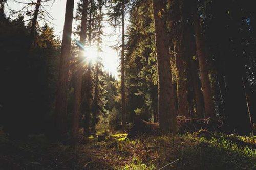 Produits Forestiers Turpin et l'essaimage : un modèle d'affaires intégré