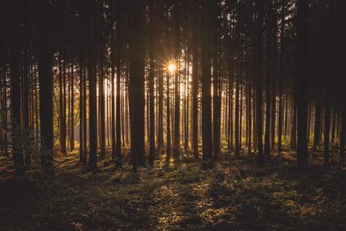 Restaurer et améliorer la résilience des forêts méditerranéennes : tester de nouvelles pratiques
