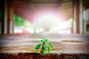 979-cinq-semaines-entrepreneuriat