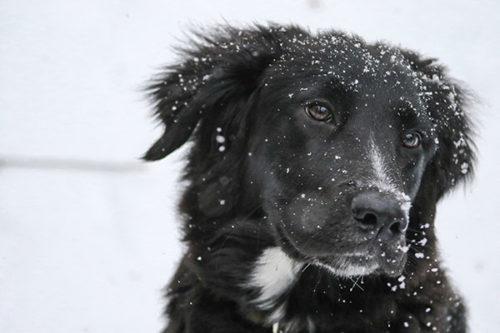 Ni queue ni tête au Refuge pour chiens errants (A