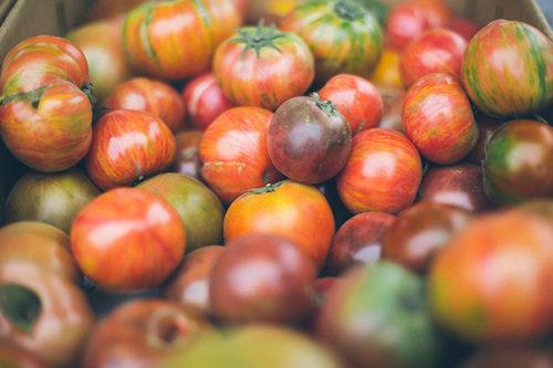 1167-benamor-tomates-algerie