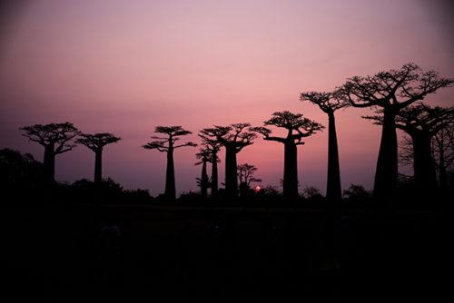 Le parc naturel de Mantadia : Investir à Madagascar dans une perspective de développement durable