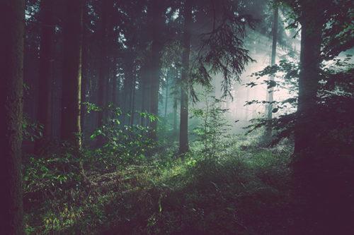 Les Produits Forestiers Charlebois ltée