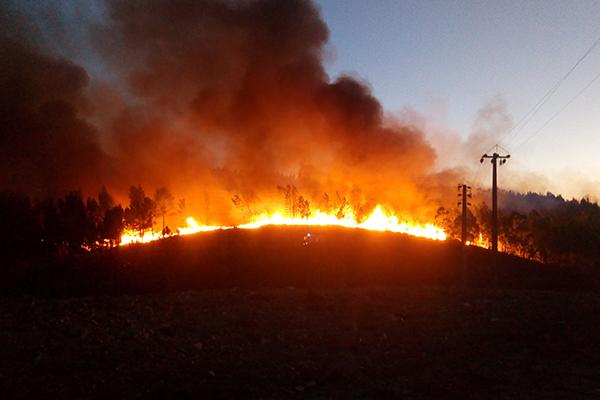 Tester de nouvelles pratiques pour accroître la biodiversité des anciennes zones incendiées en Région Méditerranéenne : utiliser les micro-habitats et la végétation en place