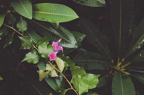 Suivi des performances des filtres plantés de végétaux en zone tropicale : Station à charge variable de champ d'Ylang 2 (Combani) - Bilan de la campagne de suivi du 22 novembre 2015 au 1er Décembre 2015