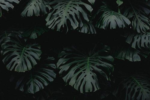 Diagnostic de la végétation implantée sur les ouvrages de protection contre les crues de la Rivière des Pluies
