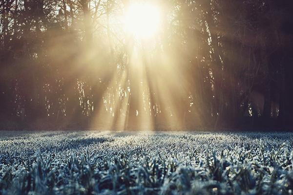 Photodégradation de micropolluants organiques sous rayonnement solaire en zone de rejet végétalisée de type bassin