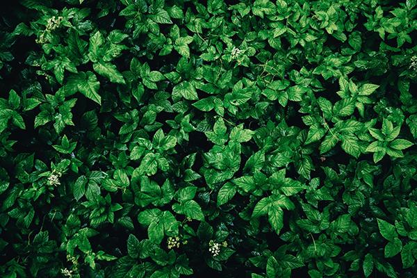 Gestion de la végétation des ouvrages hydrauliques en remblai, Guide technique