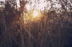 Ouvrages de traitement par filtres plantés de roseaux : guide d'exploitation
