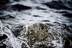 Ingénierie écologique appliquée aux milieux aquatiques. Pourquoi ? Comment ?