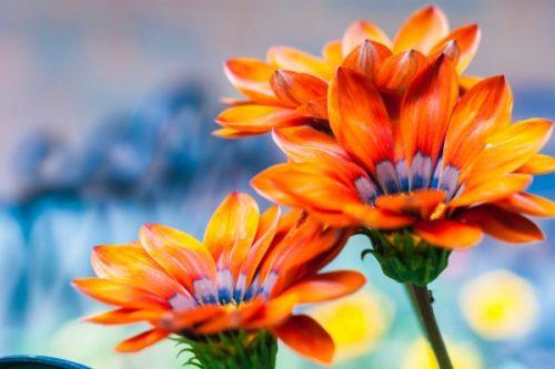 Jardins sans frontières : développement durable et collaborations entre entreprises sociales et conventionnelles